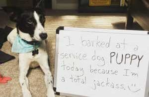 Dog being shamed for barking at a service puppy