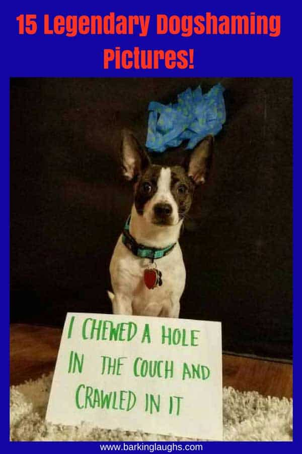 Funny Dog shaming picture of a dog that ate a hole in the sofa
