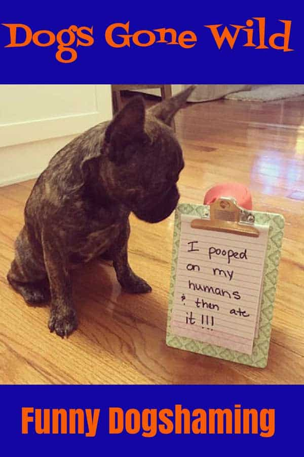 Wacky Dog Shaming Picture