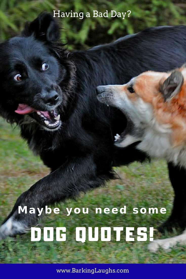 Having a Bad Day? Maybe you need some dog quotes