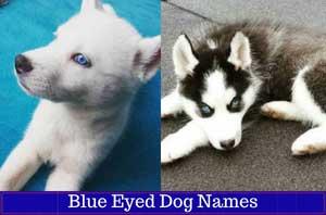 two huskies blue eyed dog names