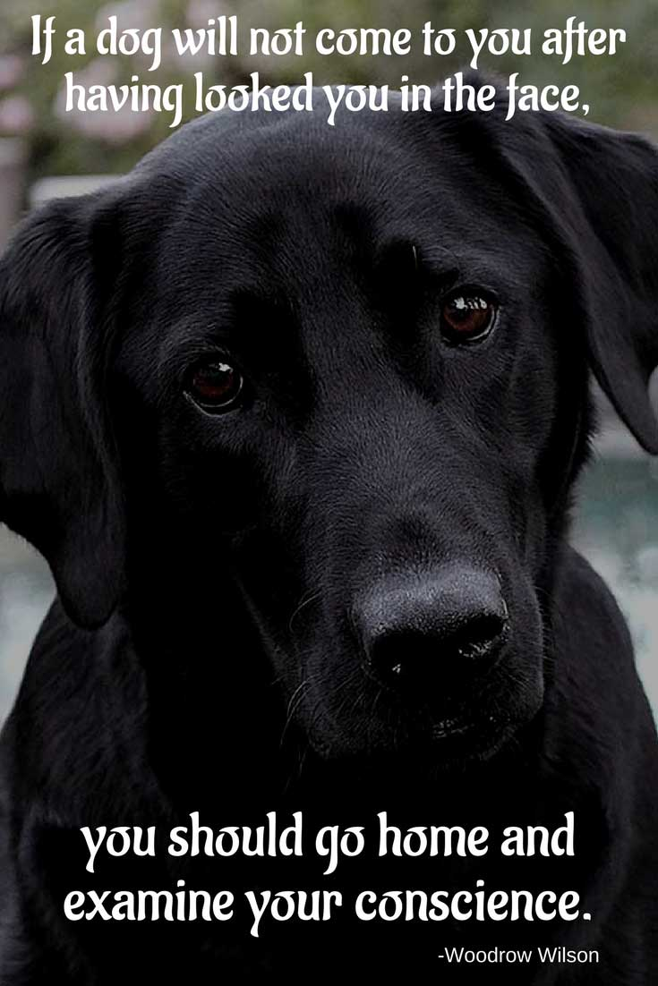 Dog Quotes. Black Labrador.