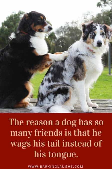 The reason a dog has so many friends dog quote