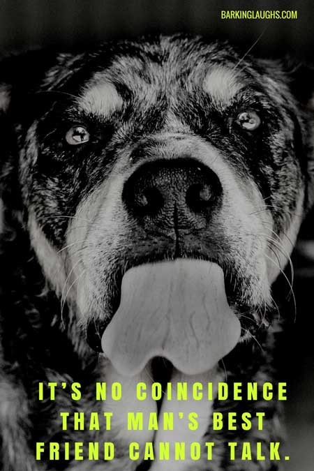 It's no coincidence that man's best friend cannot talk