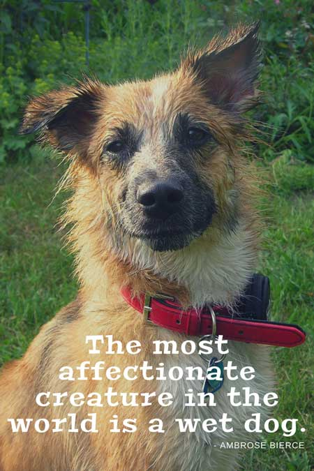 The most affectionate creature in the world is a wet dog