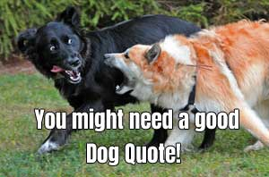 dog quotes to mellow you out