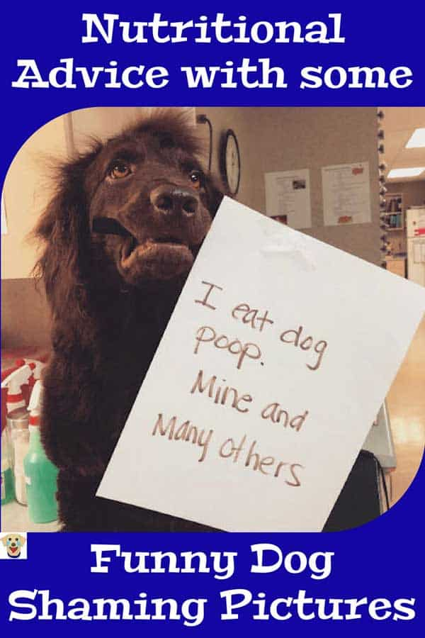 Funny dog shaming picture of a pooch that has strange eating habits