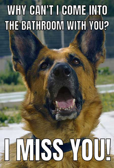 German Shepherd Dog Meme