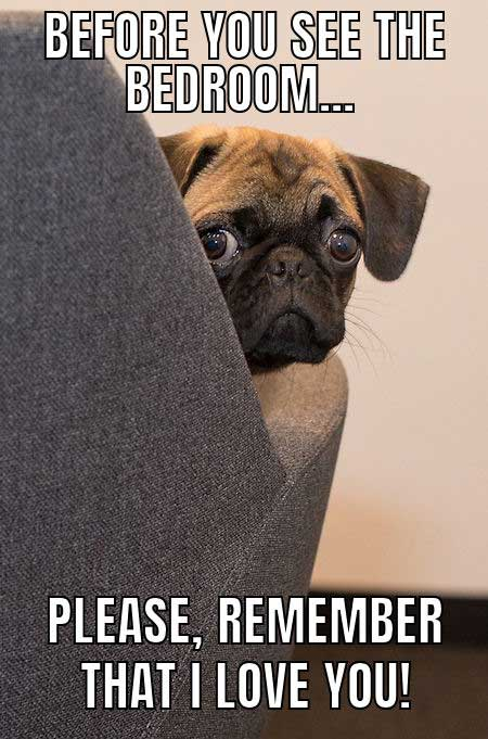 worried looking pug meme
