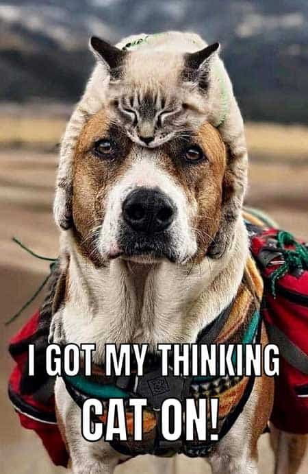 dog with a cat on his head