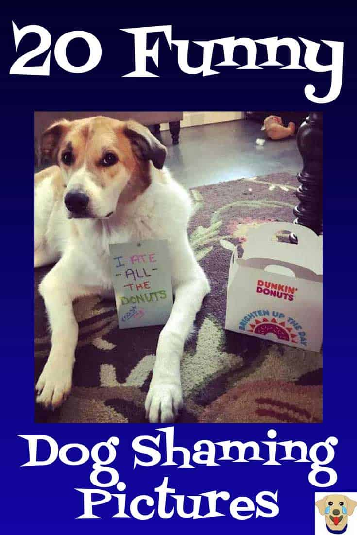 Funny Dog Shaming Picture of a smart dog that loves Dunkin Donuts!