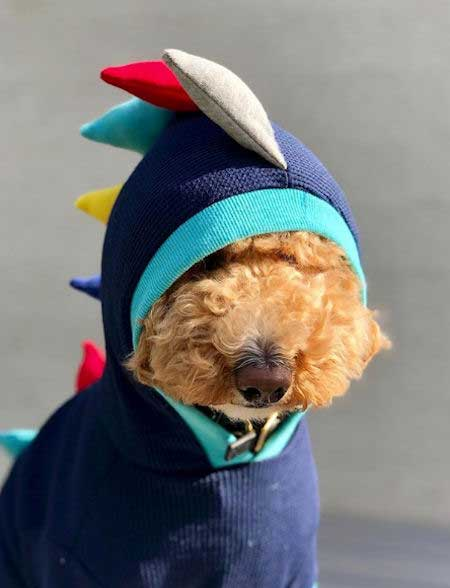 Poodle rocking a dinosaur Halloween dog costume