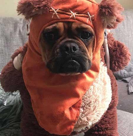 Dog in an Ewok Costume