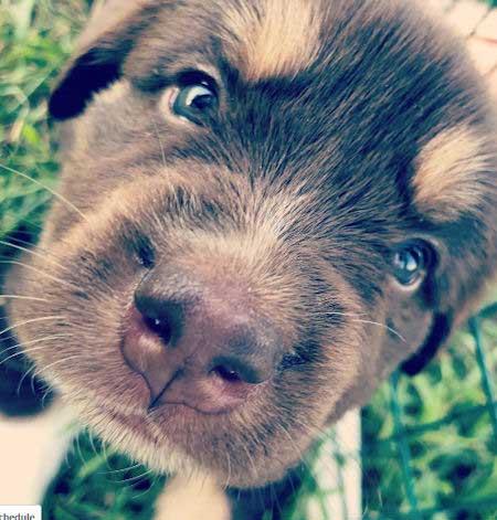 closeup of puppy eyes