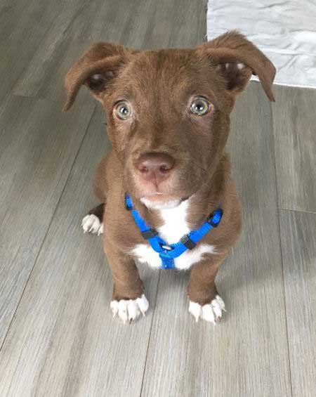 Tobias the mutt puppy picture