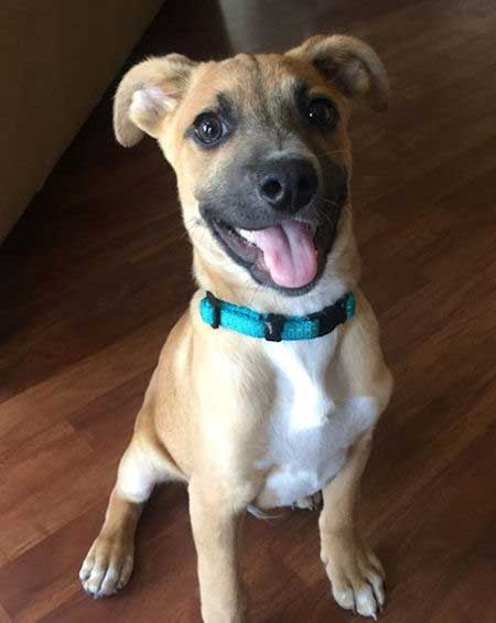 puppy picture of louie the rescue dog