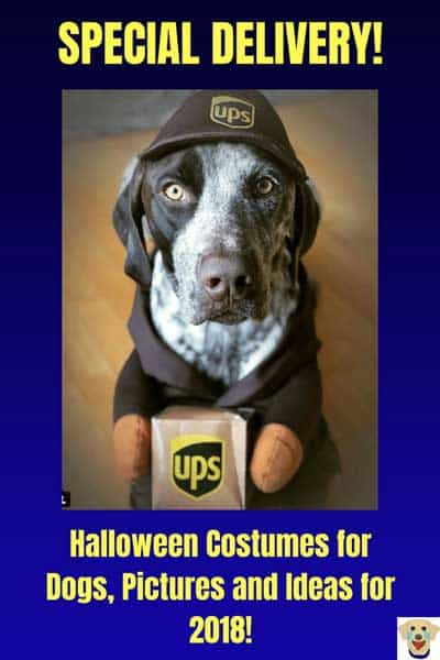The UPS dog with a special delivery for Halloween Costumes for dogs. Funny Dog picture of a K-9 rocking the UPS Halloween Dog Costume.