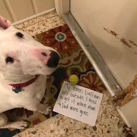 Dog scratches door in dog shame picture