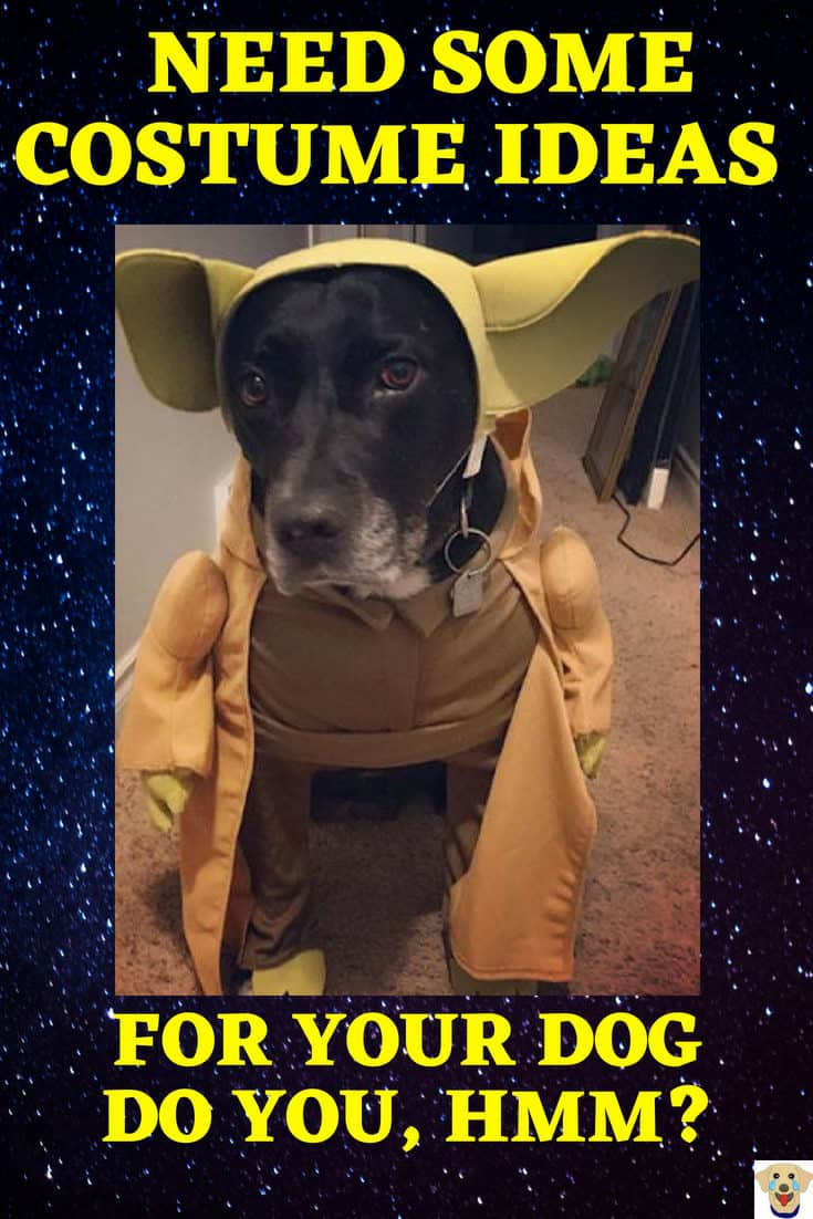 Dog Dressed up for Halloween in the Yoda dog Halloween costume.