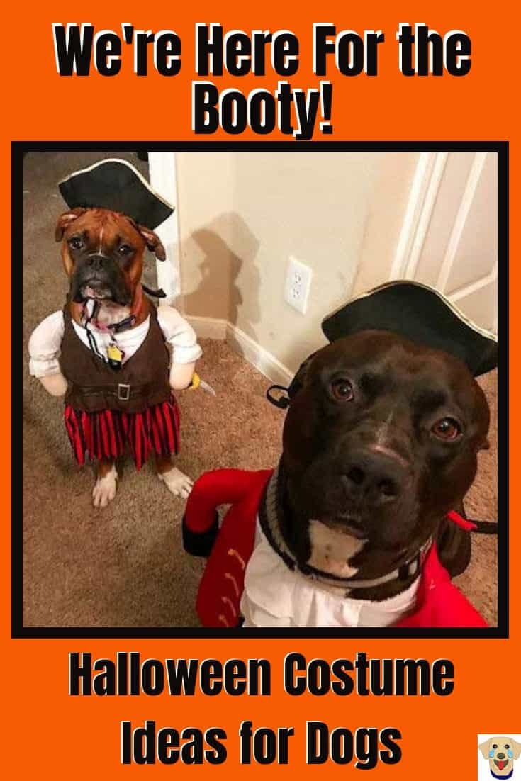 two funny dogs rocking a pirate dog costume.