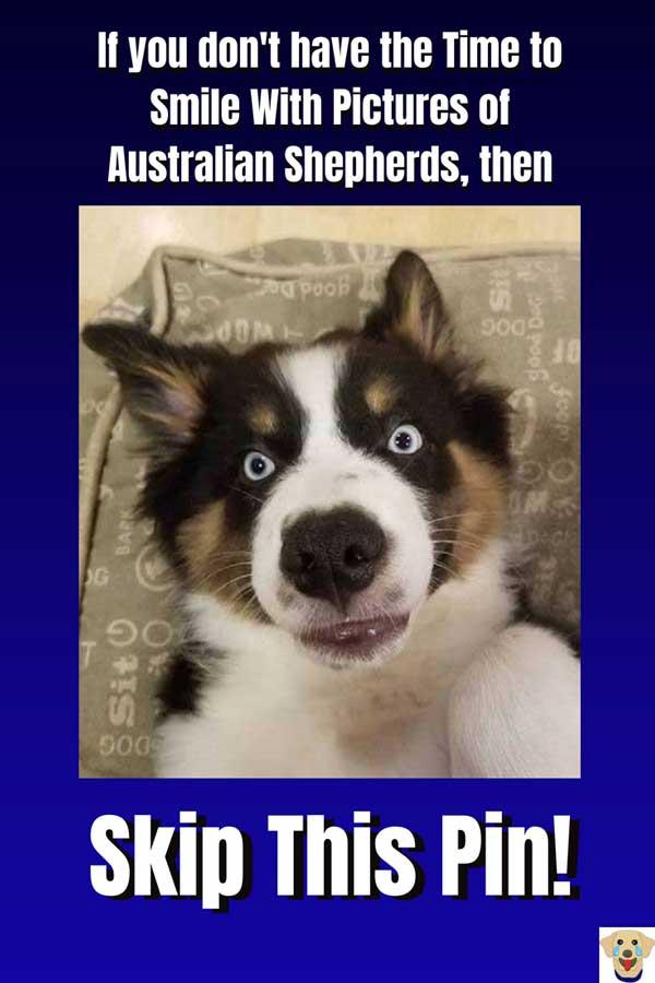 Wide eye Aussie