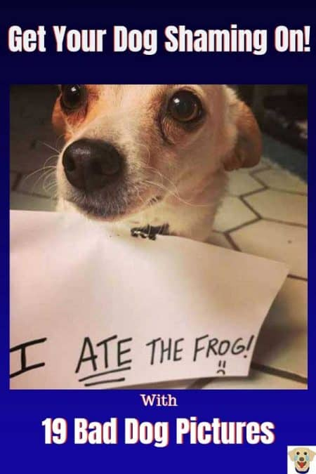 funny dog shaming picture of a dog that ate a frog