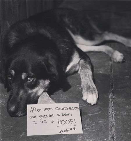 Dog shaming with a poop roller