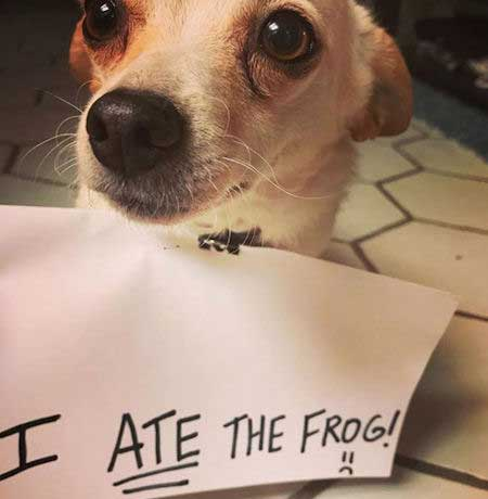 Little dog ate the frog