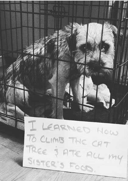 Pooch getting shamed for eating the cat food