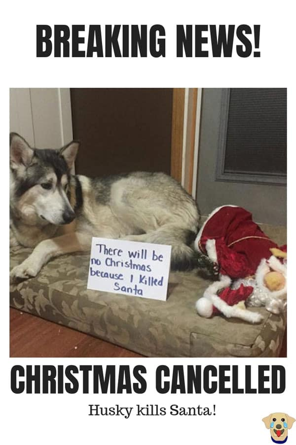 Christmas Dog Shaming with a dog that killed Santa