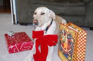Yellow Labrador with Christmas Presents