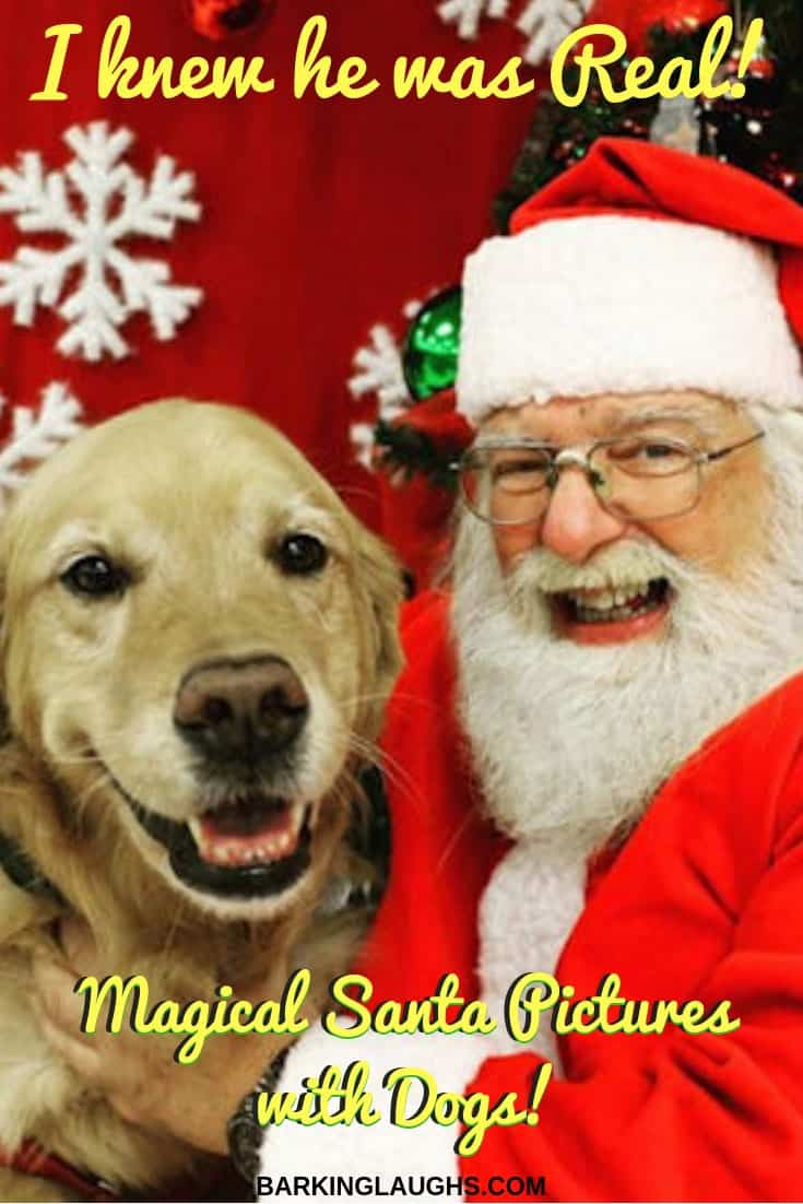 Golden Retriever with Santa Claus. Christmas Dog pictures with Santa.