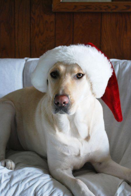 Santa Lab for Dog Owner Gifts
