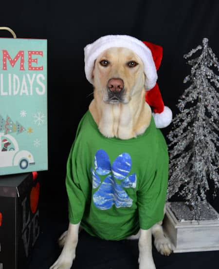 Cali the yellow lab in a Santa Clause hat wearing a Barking Laughs Paw shirt