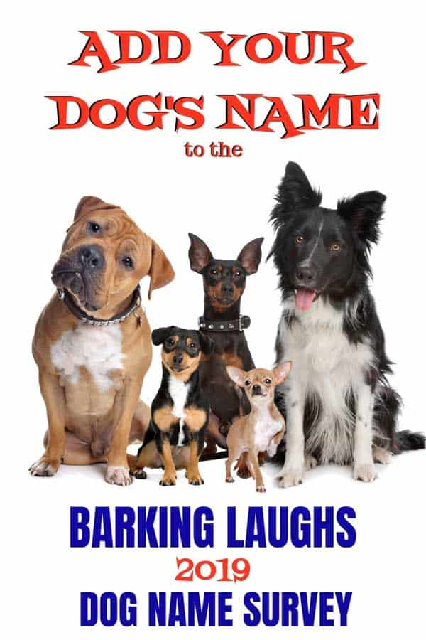 Please make sure to add your dog to the 2019 Barking Laughs Dog Name Survey