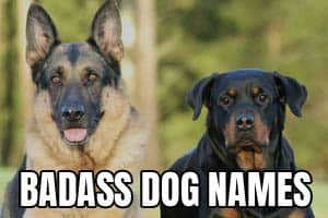 A GSD and a Rott for badass dog names.