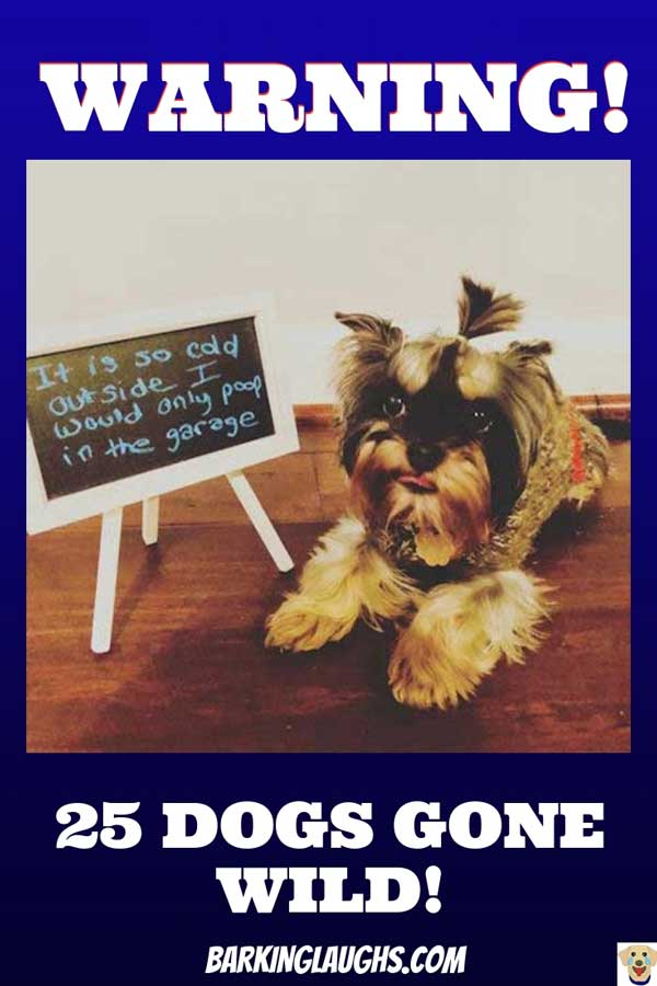 25 Crazy and Funny Dogs that are getting the dog shaming treatment