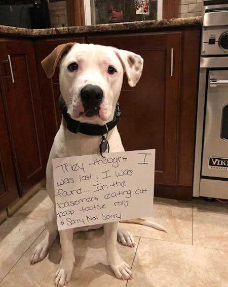 FUnny dog shaming picture of a pooch that was hiding in the basement