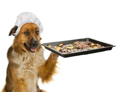 dog holding tray of food