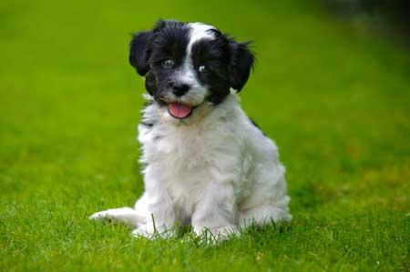 little cute puppy female