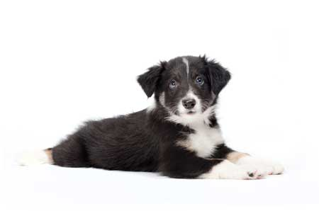 girl puppy laying on ground white background
