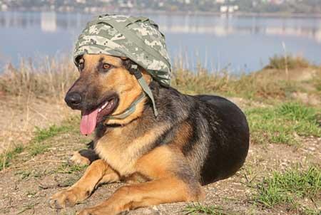 GSD in military helmet