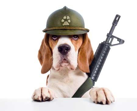 Beagle Soldier