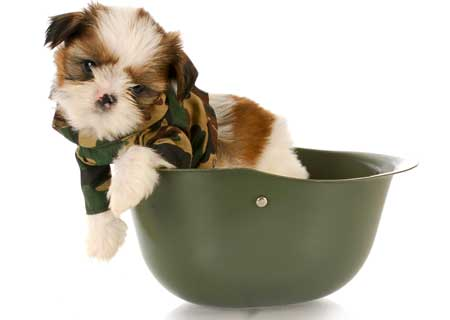 Puppy in camos and helmet