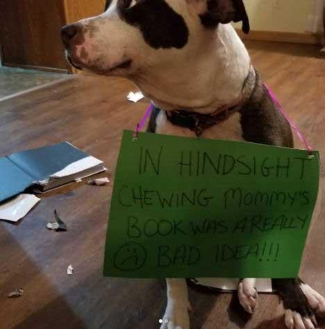 Dog getting shamed for eating a book