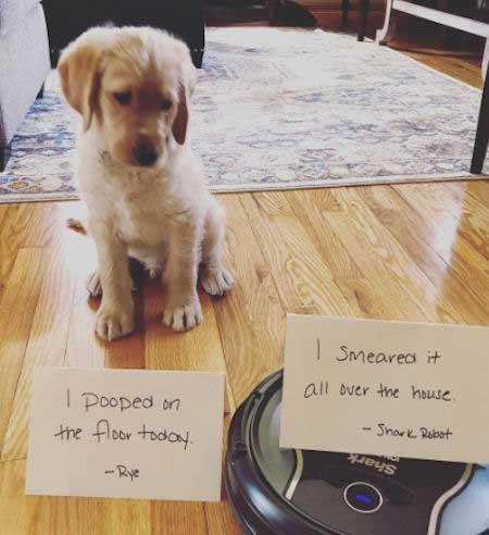 puppy and a robot make a mess