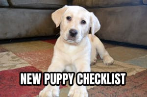 Yellow Labrador Puppy on the floor for New Puppy Checklist