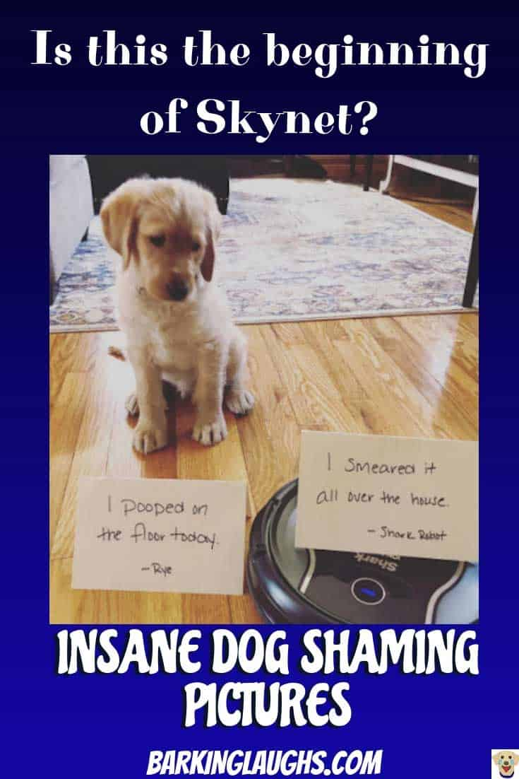 Is this why Skynet hates humans? Funny dog shaming pictures of a golden retriever puppy that pooped on the floor.