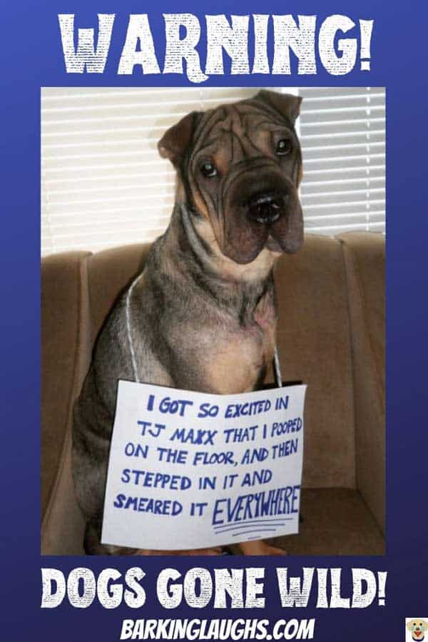 Dog shaming with TJ Maxx dog pooper