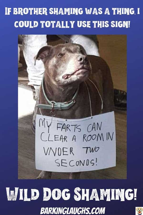 dog shaming wild farter